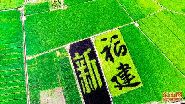 八闽大地稻田里的神奇画卷