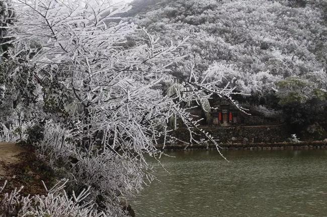 大美!武平梁野山迎来2018年的第一场雪