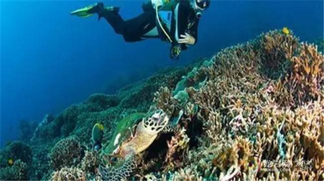 这是全国唯一海豚保护区之帝王岛.