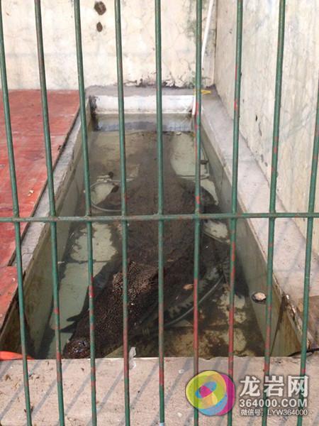 中山公园动物园:这里既是避难所但也像是拘留所 动物吃饭成问题