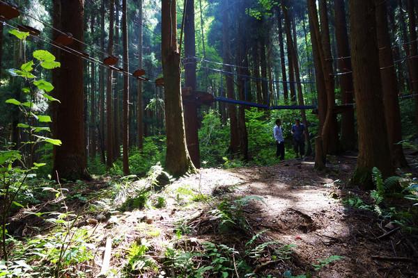 既见树木又见森林